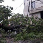 Más de 40 árboles caídos y graves problemas en el suministro eléctrico
