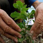 Alimentos sanos en un distrito donde hay venta ilegal de tierra y degradación permanente del suelo