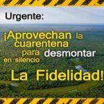Somos Monte denuncia desmonte a 8 km del Parque Nacional El Impenetrable