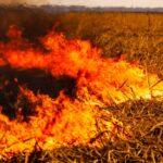 Arde el Delta: ya se quemó el equivalente a 15 ciudades de Rosario