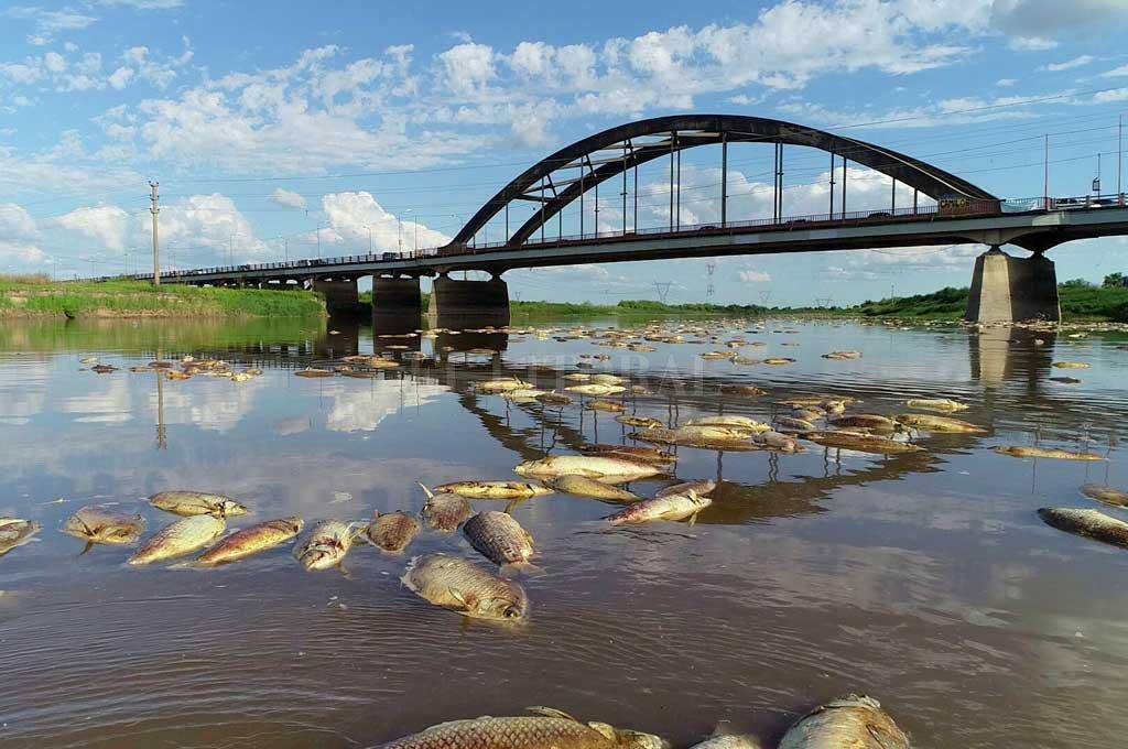Santa Fe: Hallaron herbicidas e insecticidas en el Salado y en los peces muertos